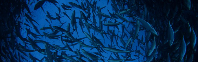 June - World Ocean Day
